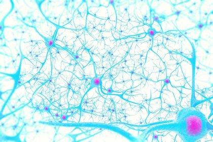 Crean una molécula que une las conexiones nerviosas y repara el daño neurológico