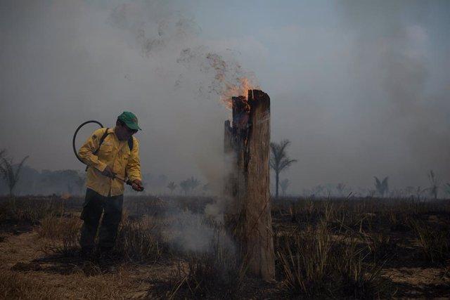 Brasil.- Brasil suspende todas las acciones de combate contra la deforestación e
