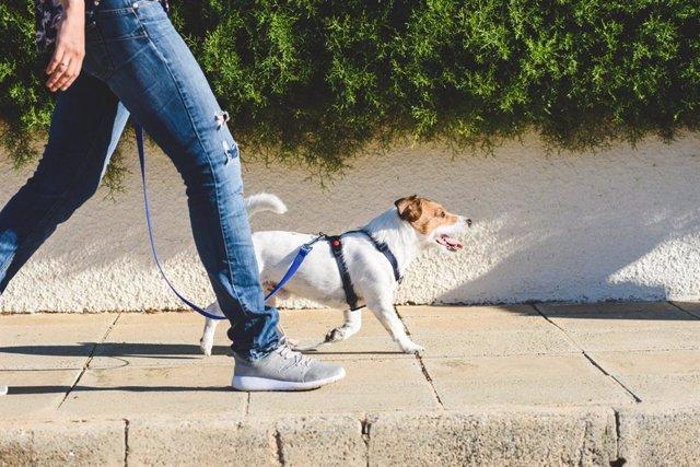 Paseando al perro por la calle.