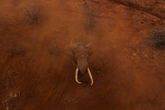 Zimbabue.- Hallados muertos once elefantes presuntamente por ántrax en una reser