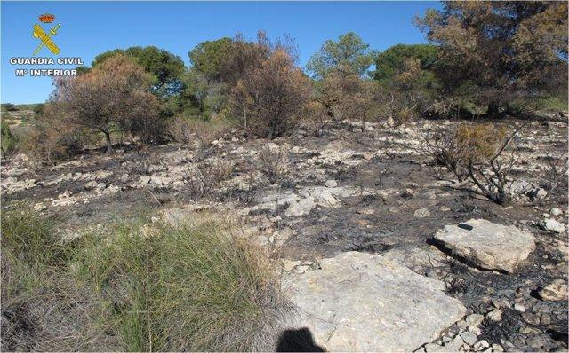 Una de las zonas calcinadas por uno de los incendios provocados.