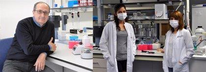 """Desarrollan un método 'in vitro' """"muy sensible"""" para detectar un hongo oportunista que provoca una neumonía grave"""