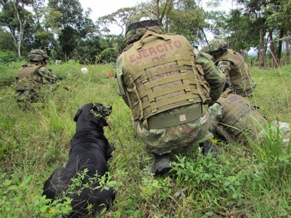 AMP.- Colombia.- Mueren cuatro militares en un ataque cuando erradicaban cultivos de coca en el norte de Colombia