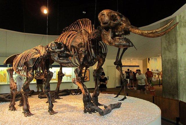 Cambios climáticos forzaban a los mastodontes a mudarse al norte