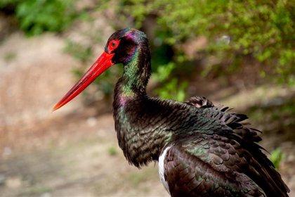 "SEO/Birdlife asegura que el incendio de Almonaster (Huelva) afecta a ""zonas con alto valor"" y de nidificación de aves"