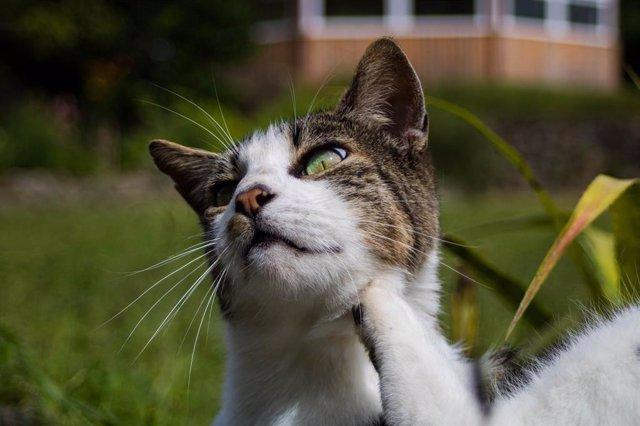 Un gato al aire libre