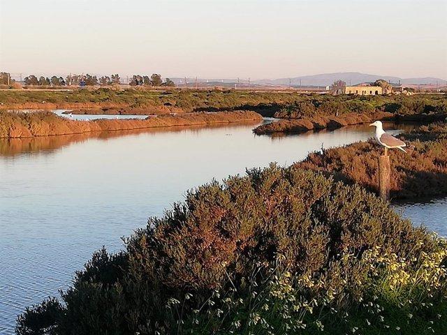 Imagen de los humedales del Parque Natural Los Toruños, en Cádiz