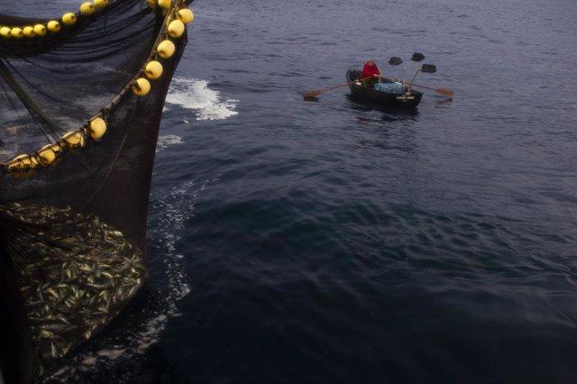 La chalupa apoya a la pesca de la anchoa en el amanecer junto a la captura con la red llena de peces  .