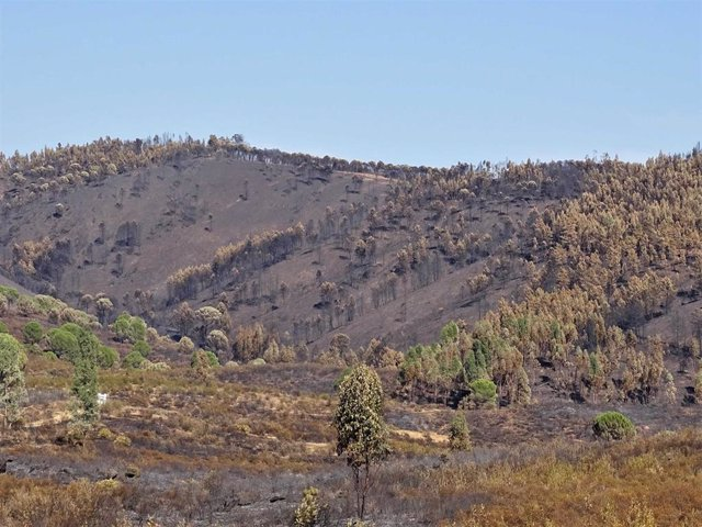 Masa forestal en Almonaster la Real.
