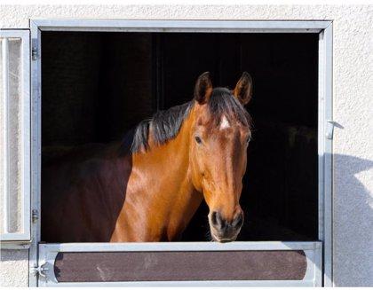 Detectados dos positivos por fiebre del valle del Nilo en caballos en Santa Amalia y Guareña