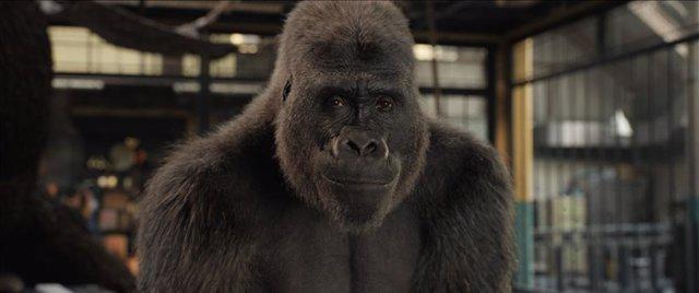 El magnífico Iván: la aventura del gorila pintor llega el 11 de septiembre a Disney+