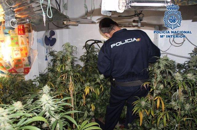 Imagen de archivo de una plantación de marihuana intervenida en una vivienda de Granada