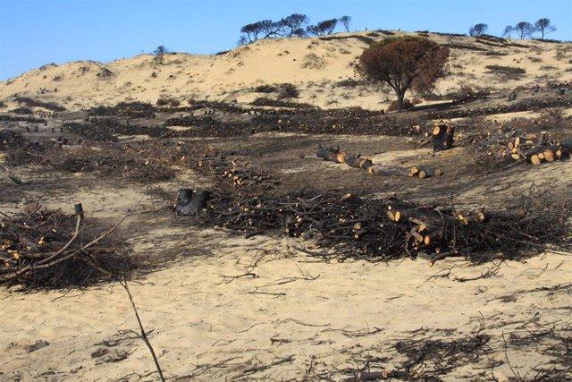 Trabajos en la zona del incendio de Las Peñuelas en Moguer (Huelva).