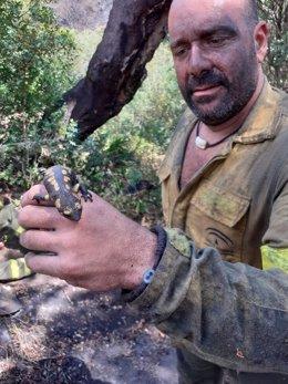 Uno de los efectivos del Infoca consigue encontrar vida en el interior del fuego