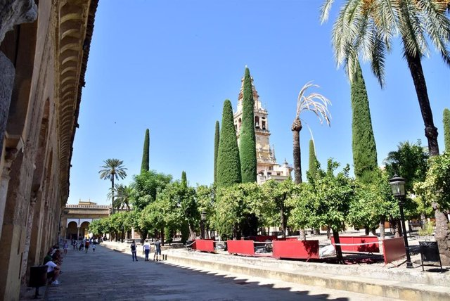 Zona acotada del Patio de los Naranjos de la Mezquita de Córdoba donde se ha iniciado la excavación arqueológica.