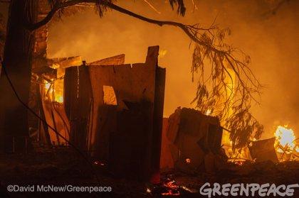 Greenpeace alerta de que el fuego ha arrasado en California más superficie que en 2018, que hasta ahora tenía el récord