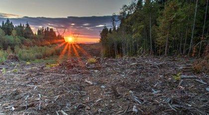 Más del 90 por ciento de áreas protegidas están aisladas entre sí