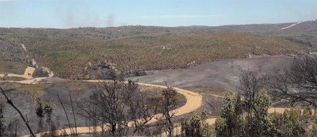 Terreno de Ence afectado por el incendio de Almonaster la Real (Huelva).