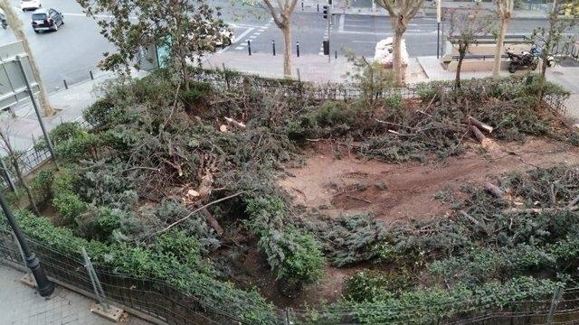 Tala de árboles en el barrio Niño Jesús, en el distrito de Retiro