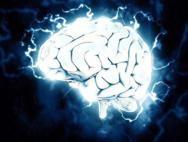 Las células inmunes 'esculpen' circuitos en el cerebro
