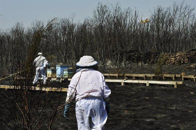 Apicultores revisan y riegan sus colmenas junto a una zona quemada por el incendio de Cualedro (Ourense) que sigue sin control desde su inicio el miércoles y que se ha convertido ya en el peor del año, arrasando 1.000 hectáreas, en Cualedro, Ourense, Gali