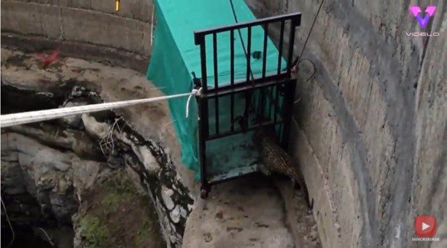 Un grupo de voluntarios rescatan un cachorro de leopardo atrapado en un pozo de más de 9 metros