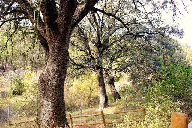 Bosque de Valdenazar, Yebes (Guadalajara).
