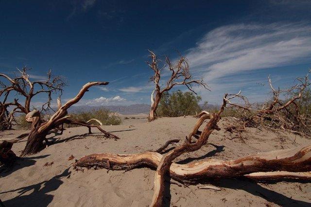 Valle de la Muerte, en California, donde se registraron 54,4 grados Celsius el 16 de agosto
