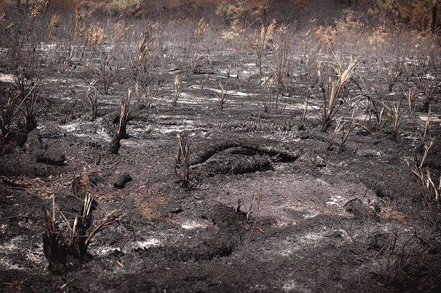 Disminución de los incendios forestales observados en África Central