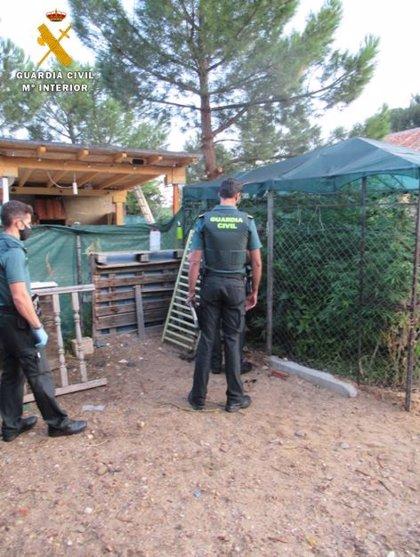 Dos detenidos en Boecillo (Valladolid) con una plantación de marihuana en su vivienda