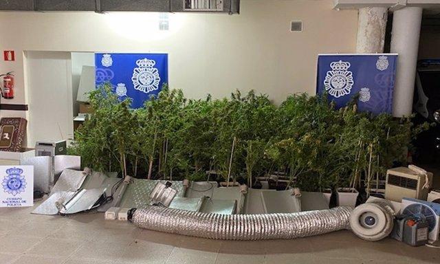 Intervención en una plantación de marihuana en Zarzuela del Monte (Segovia).
