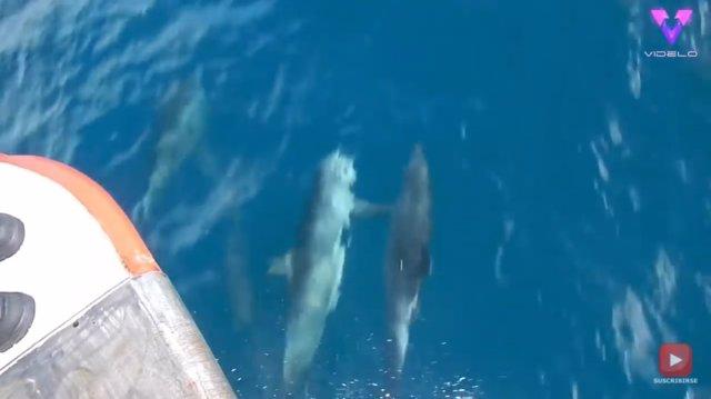 """Capturan en vídeo a dos delfines """"cogidos de las manos"""" mientras nadan"""