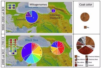 La gran estepa desplaza a Anatolia como cuna del caballo domesticado