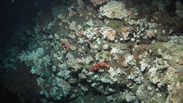 La acidificación amenaza con colapsar los corales de aguas profundas