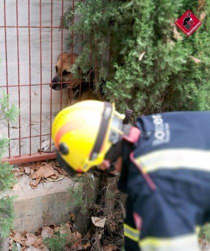 Rescatado un perro que se había quedado atrapado entre una pared y una valla en Dénia