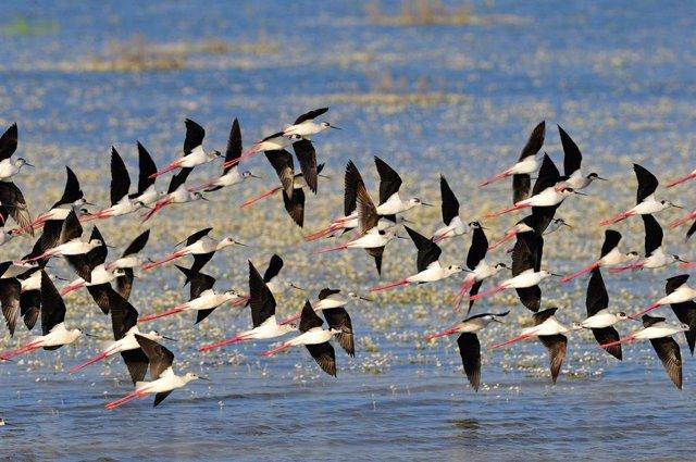 Aves en Doñana.