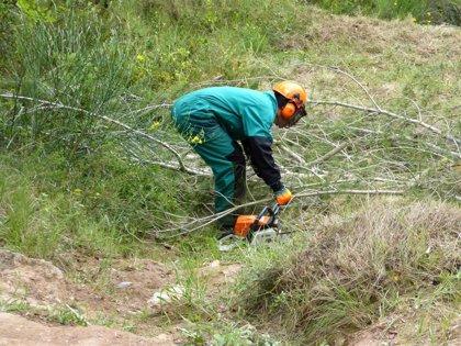 Endesa invierte más de 1,1 millones en la limpieza de las líneas de distribución en zonas boscosas de Baleares