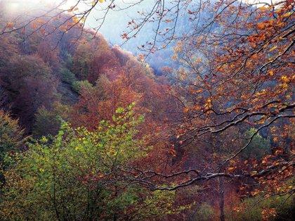 El otoño será más cálido y seco de lo habitual en Cantabria