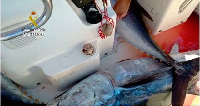 Pla tancat dels exemplars de tonyina roja capturats il·legalment per una embarcació recreativa a Salou.