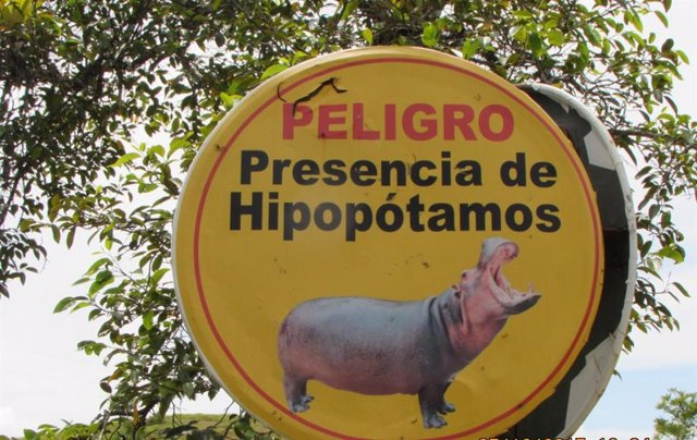 Alerta de hipopótamos en la antigua hacienda de Pablo Escobar