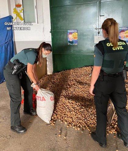 Detenidas dos personas por el robo de casi dos toneladas de almendras en Cabanes y l'Alcora (Castellón)