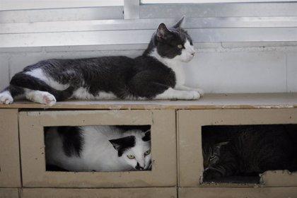 Buscan hogar para 96 gatos después del desahucio de su dueño en Gandia