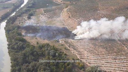 Declarado un incendio forestal en Montoro (Córdoba)