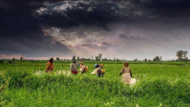 Granja agrícola en la India