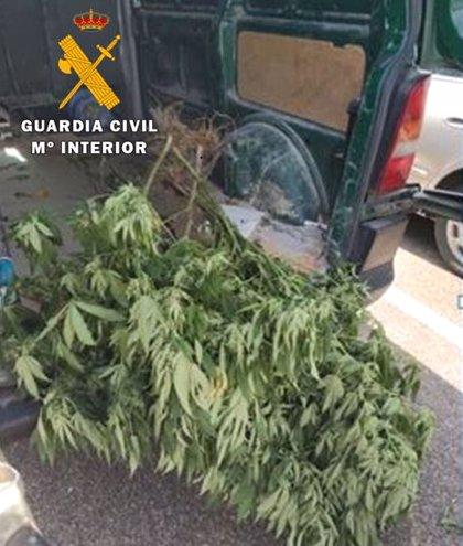Dos detenidos por robar marihuana en Boecillo a un tercero, investigado por tener una plantación