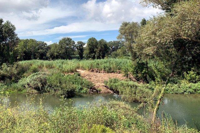 Un tram del riu Fluvià al seu pas pels Aiguamolls de l'Empordà, després de l'actuació per retirar les restes vegetals. Imatge cedida el 22 de setembre del 2020 (Horitzontal)
