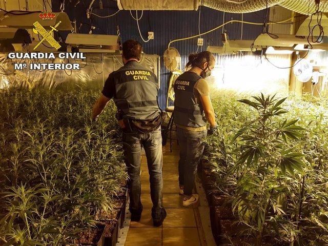 Una trentena de detinguts per tràfic internacional de marihuana a Catalunya