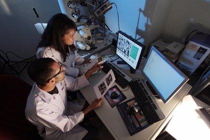 Nuevos conocimientos sobre cómo el fármaco pomalidomida combate el cáncer