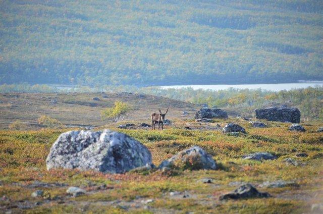 Toda la tundra ártica se hace más verde a medida que sube el termómetro