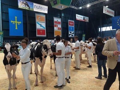 Agropec se inaugura este viernes con limitación de aforo y actividades de fomento de la cabaña ganadera astur